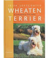 H Bok irish softcoated wheaten terrier